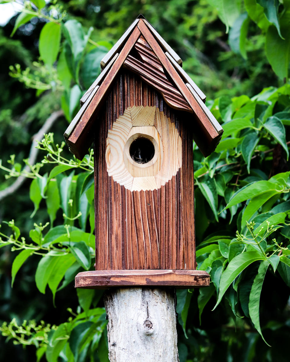 winter garden jobs: bird box