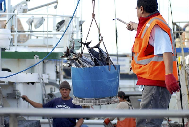 In this Thursday, Feb. 2, 2017 file photo, a catch of fish is unloaded from a commercial fishing boat at Pier 38 in Honolulu. The sponsor of a Hawaii bill seeking to change the way commercial licenses are granted to foreign fishermen says the bill is in danger of dying after fishing industry representatives told lawmakers the bill could wreck the industry. The bill would restrict commercial fishing licenses to people who are legally allowed to enter the U.S. (AP Photo/Caleb Jones, File)