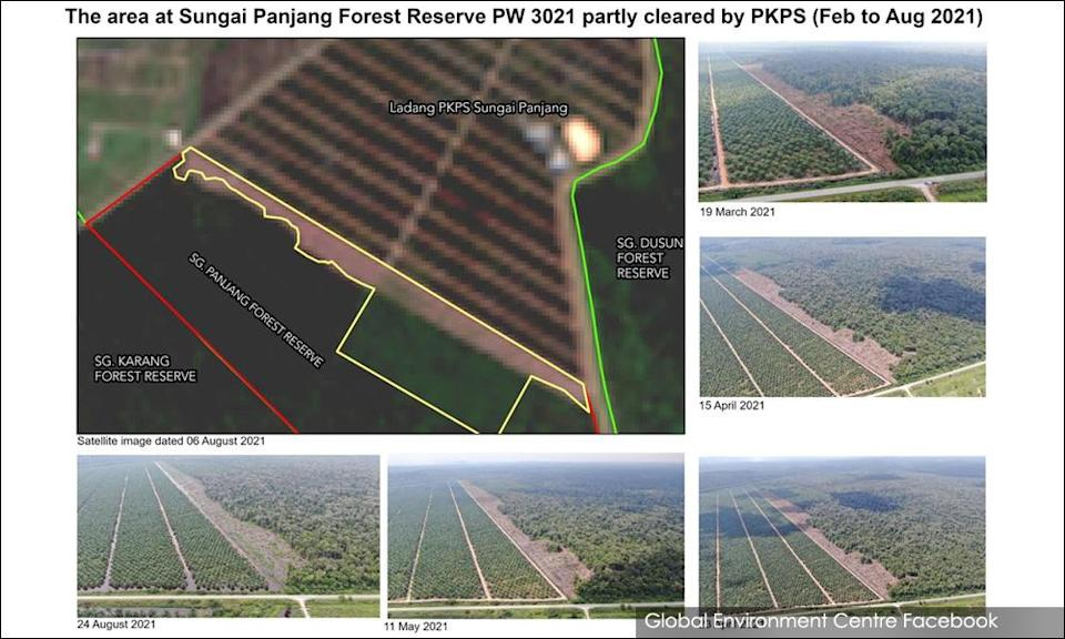 Environmentalists: Stop clearing forest to 'replace' Kuala Langat