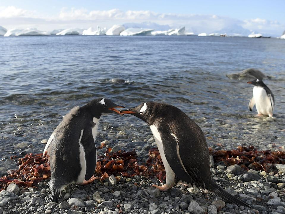 <p>Marine environment around Antarctica supports animal life including penguins, seals, whales and albatrosses, the WWF says</p> (AFP via Getty Images)