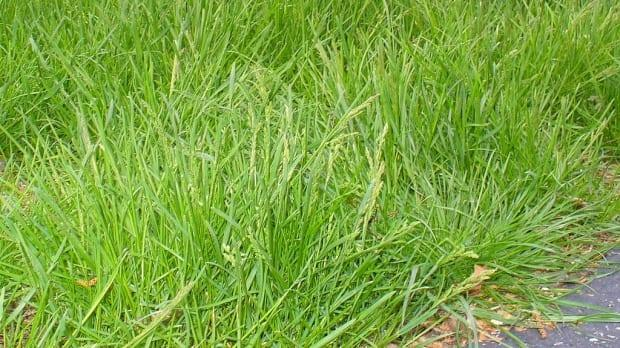 Dieppe and Riverview are both suspending enforcement of the by-law that addresses grass height for the month of May.