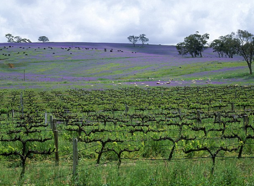 The Riesling Trail where the two women were cycling. Photo: Getty