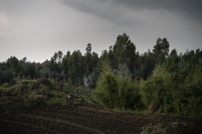 Farmers work on their land near the Volcanoes National Park in Kinigi, Rwanda. In 2005, the government adopted a model to steer 5% of tourism revenue from Volcanoes National Park to build infrastructure in surrounding villages, including schools and health clinics. Two years ago, the share was raised to 10%. (Photo: Felipe Dana/AP)