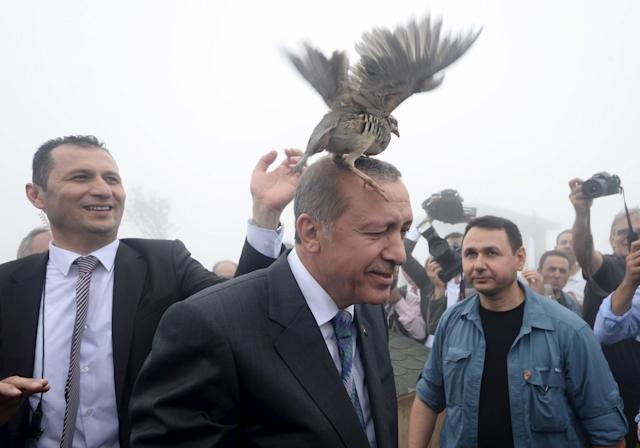 <p>A grouse sits on Turkish President Tayyip Erdogan's head as he visits a facility of the Forest and Water Management Ministry in Rize, Turkey, August 14, 2015. (Stringer/Reuters) </p>