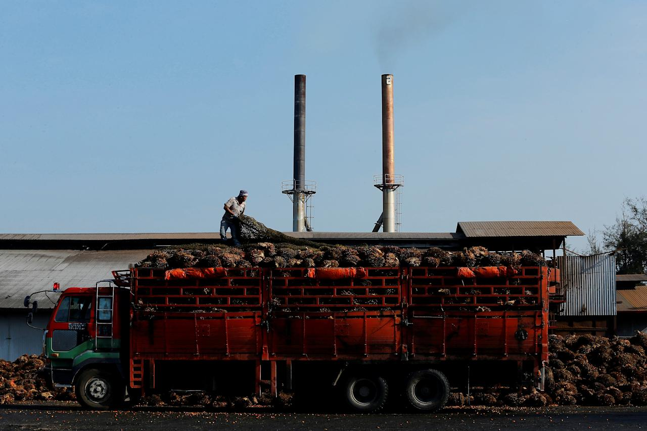 FILE PHOTO: A worker adjusts the netting on a lorry carrying palm oil fruits inside a palm oil factory in Sepang, outside Kuala Lumpur June 18, 2014.   REUTERS/Samsul Said/File Photo