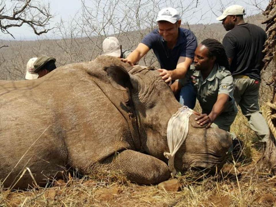 Freeland co-founder Steven Galster taking part in rhino conservation efforts in South Africa (Freeland)