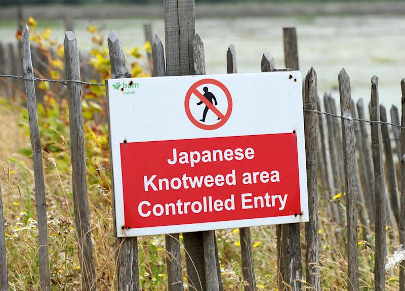 A sign prohibiting entry to a site due to the presence of Japanese Knotweed (Photo by Clive Gee/PA Images via Getty Images)