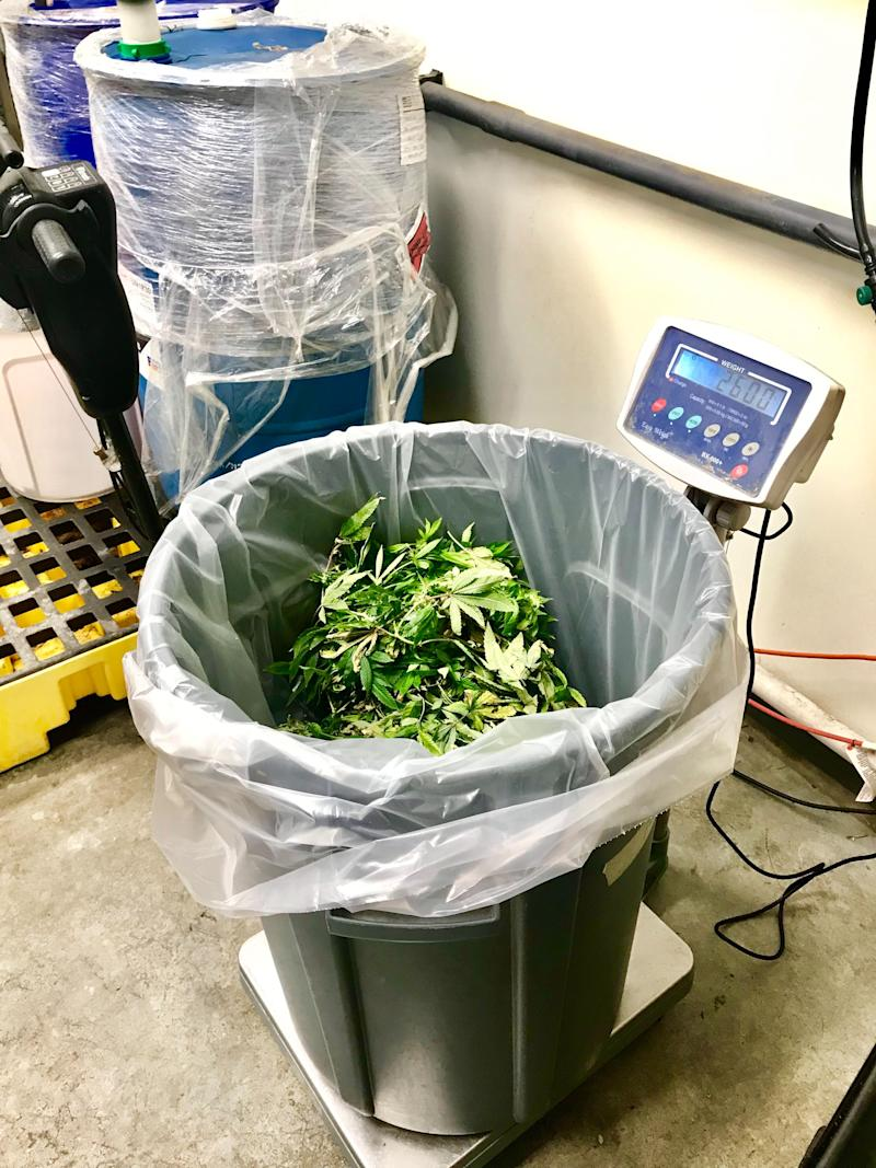 Discarded marijuana stems and leaves are weighed and tracked at Cresco Labs in Joliet, Illinois on May 22, 2019. Image credit: Alexis Keenan/Yahoo Finance