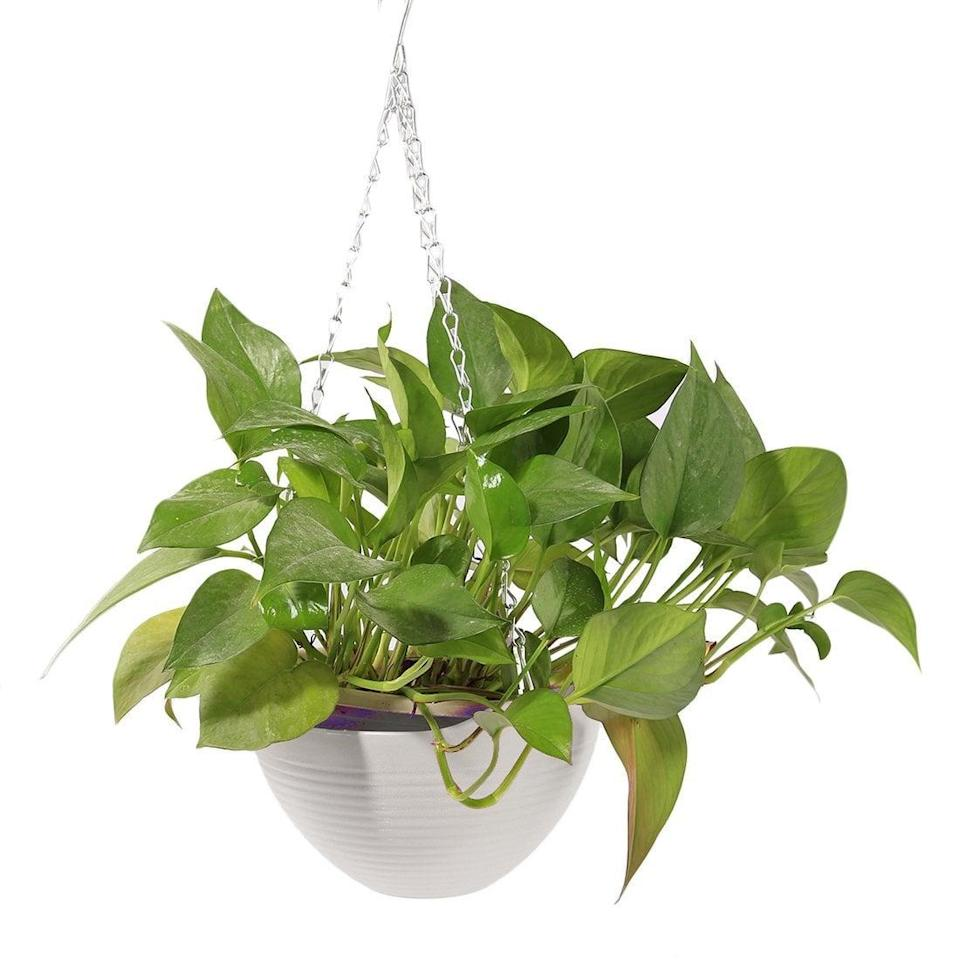 <p>This <span>Plastic Hanging Basket Flower Pot</span> ($10) will make a fun addition to your kitchen.</p>