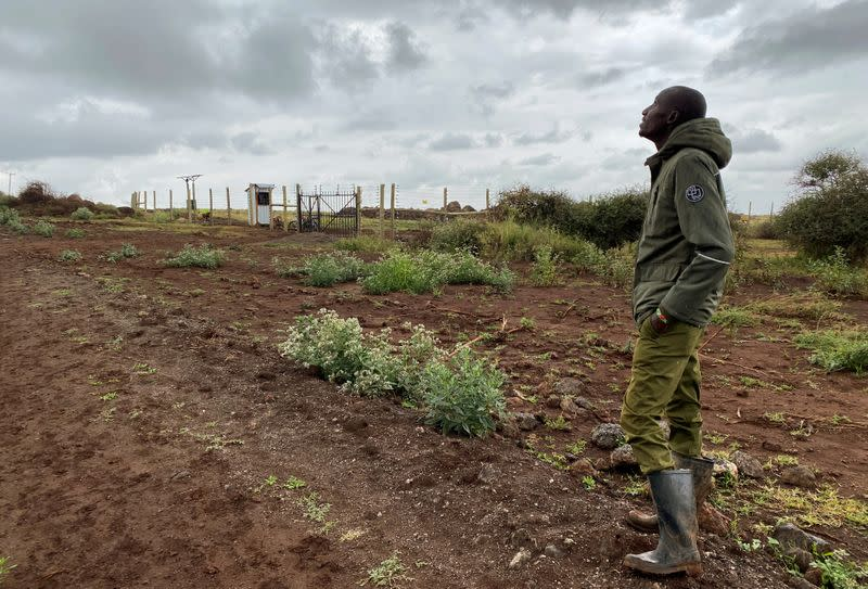 Jeremiah Salash, a representative of KiliAvo Fresh Ltd stands outside their compound within the Amboseli ecosystem near Kimana
