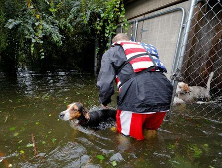 Abandoned dogs trapped in a cage, filling with rising floodwater, swim away after volunteer rescuer Ryan Nichols of Longview, Texas, freed them in the aftermath of Hurricane Florence, in Leland, North Carolina, U.S., September 16, 2018. REUTERS/Jonathan Drake