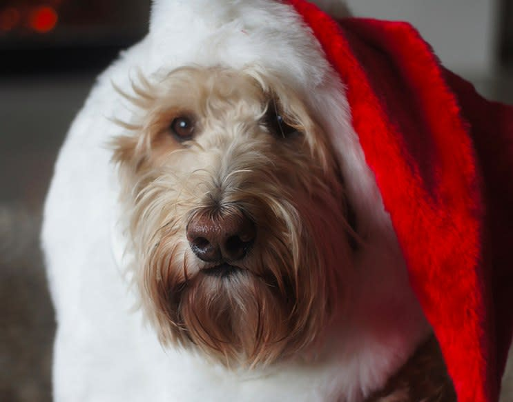 8 Festive Christmas Tumblrs, Presented by Santa Dogs