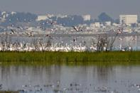 Residents complain of pollution, recurrent flooding and swarms of mosquitos from the lagoon, one of North Africa's most important wetlands