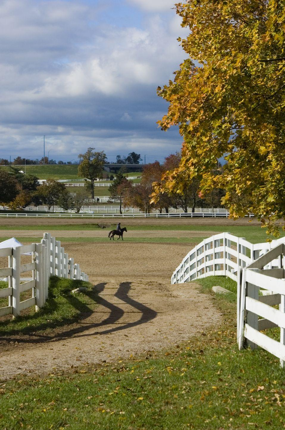 """<p><a href=""""https://visithorsecountry.com"""" rel=""""nofollow noopener"""" target=""""_blank"""" data-ylk=""""slk:Horse Country"""" class=""""link rapid-noclick-resp"""">Horse Country </a>is a great place to learn about the gentle creatures and introduce kids to Equestrianism at their own pace. Book a tour today see what it's all about. Families can visit with mares and foals in the nursery, learn abut horses' nutrition and health at the feed mill and much more.</p>"""