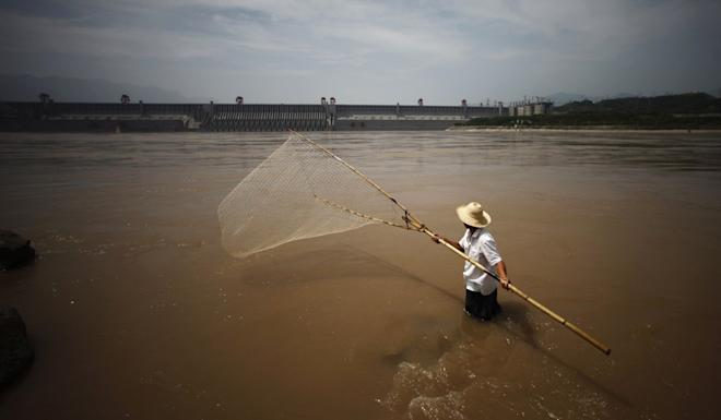 Chinese paddlefish numbers rapidly declined due to overfishing and degradation of its Yangtze River habitat. Photo: Reuters