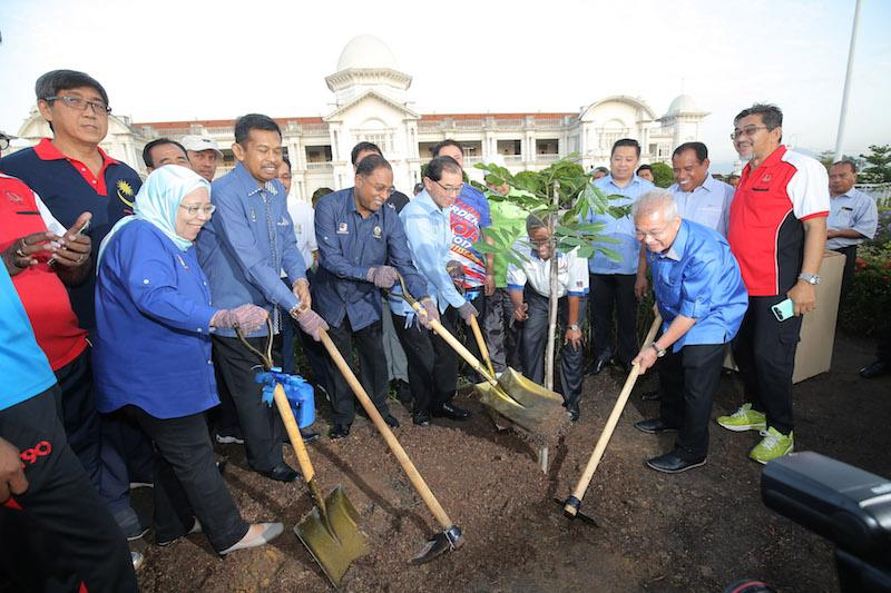 One year later, iconic Ipoh tree replanted