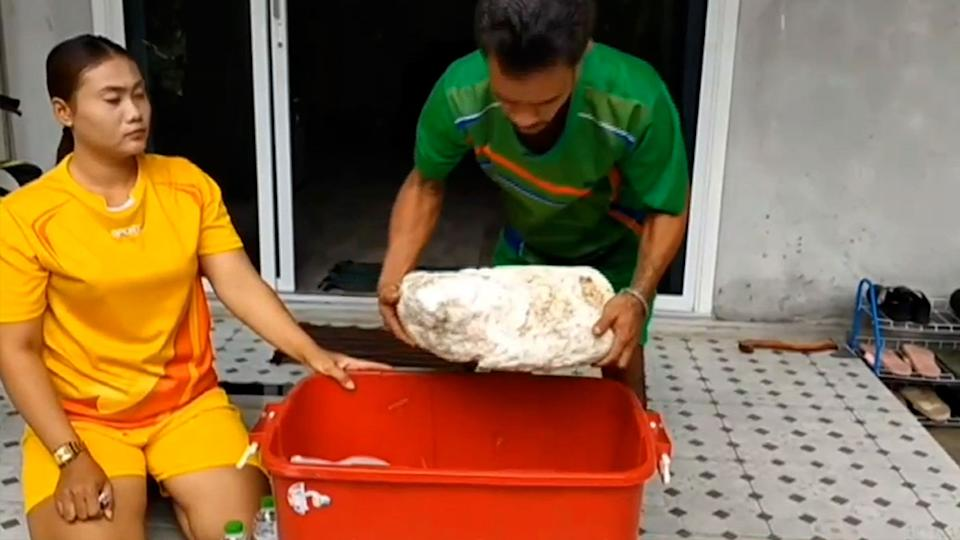 Veera Juengboon, 31 and his wife Monruedee found 15kg of ambergris while on a beach in Thailand. Source: Viral Press/Australscope