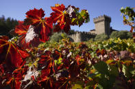 Fall colors are seen on leaves in a vineyard outside the Tuscan-style castle, Castello di Amorosa in Calistoga, Calif., on Thursday, Oct. 15, 2020. In three of the past four years, major wildfires driven by a changing climate have devastated parts of the world-class region, leaving little doubt that it's vulnerable to smoke, flames and blackouts during the fall. (AP Photo/Eric Risberg)