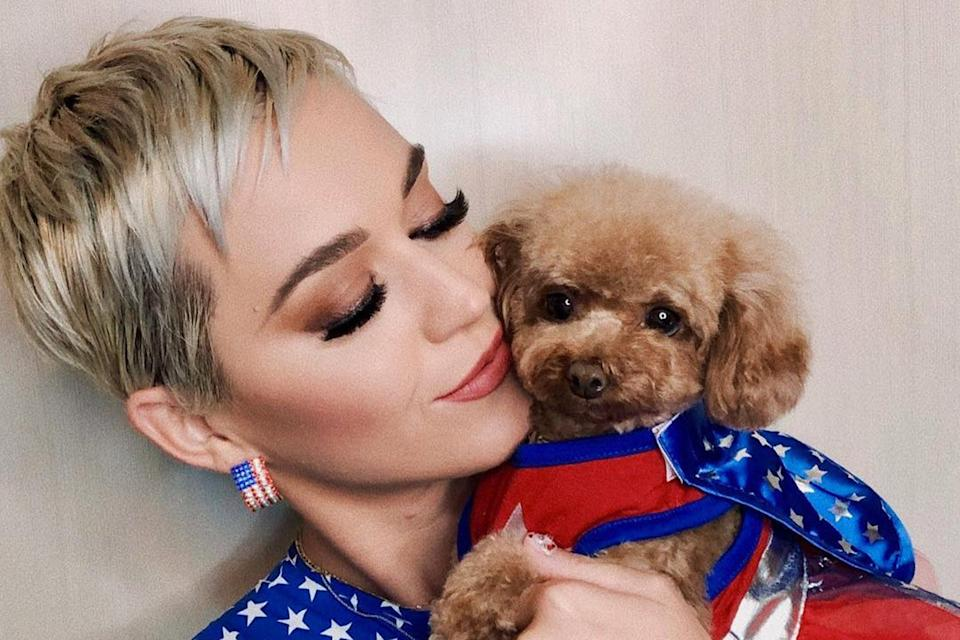 <p>Katy Perry says she and her dog Nugget have been on a vegan 'journey'</p> (Katy Perry)