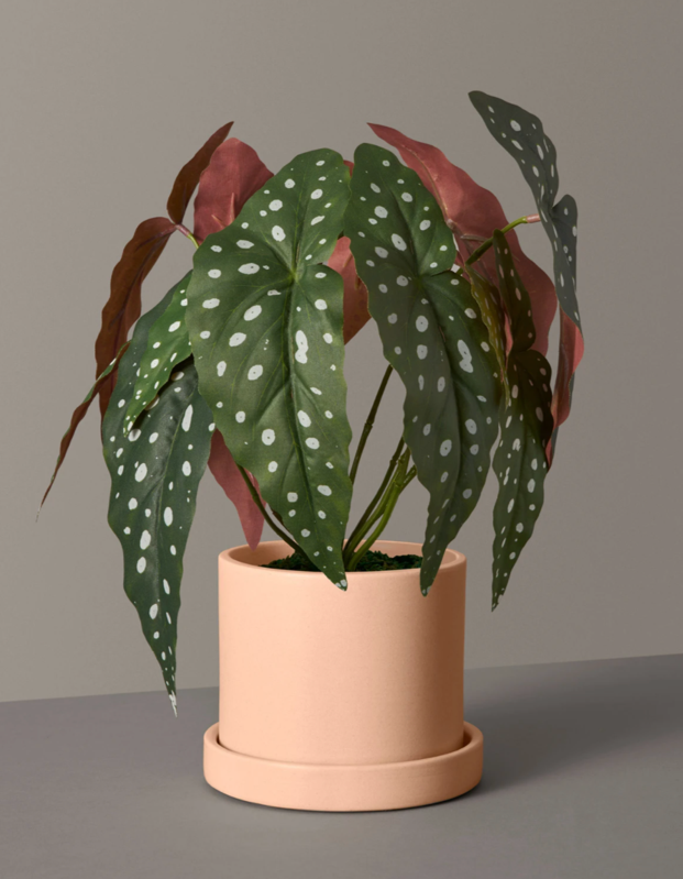 "The perfect gift for the aspiring plant mom who can't keep a cactus alive to save her life, this faux green friend will make for a no-maintenance window topper. $82, The Sill. <a href=""https://www.thesill.com/products/angel-wings-begonia-artificial-plant?variant=30407958691945"" rel=""nofollow noopener"" target=""_blank"" data-ylk=""slk:Get it now!"" class=""link rapid-noclick-resp"">Get it now!</a>"