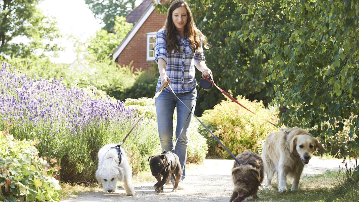 young woman walking dogs