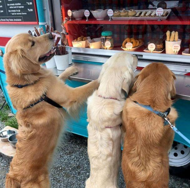 PHOTO: Arwyn Todd's two golden retrievers Reida and Rose take begging to a whole other level outside of The Seattle Barkery's treat truck. (reidathegolden)