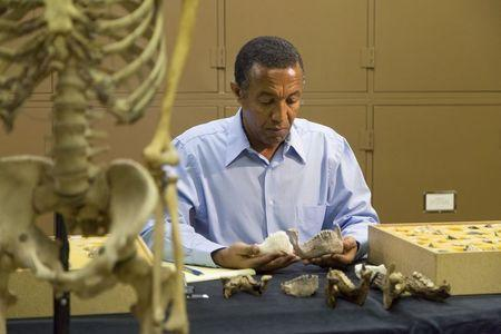 Paleoanthropologist Yohannes Haile-Selassie conducts comparative analysis of Australopithecus deyiremeda in his laboratory at Cleveland Museum of Natural History on April 29, 2015 in this image released to Reuters on May 26, 2015. REUTERS/Laura Dempsey/Cleveland Museum of Natural History/Handout via Reuters