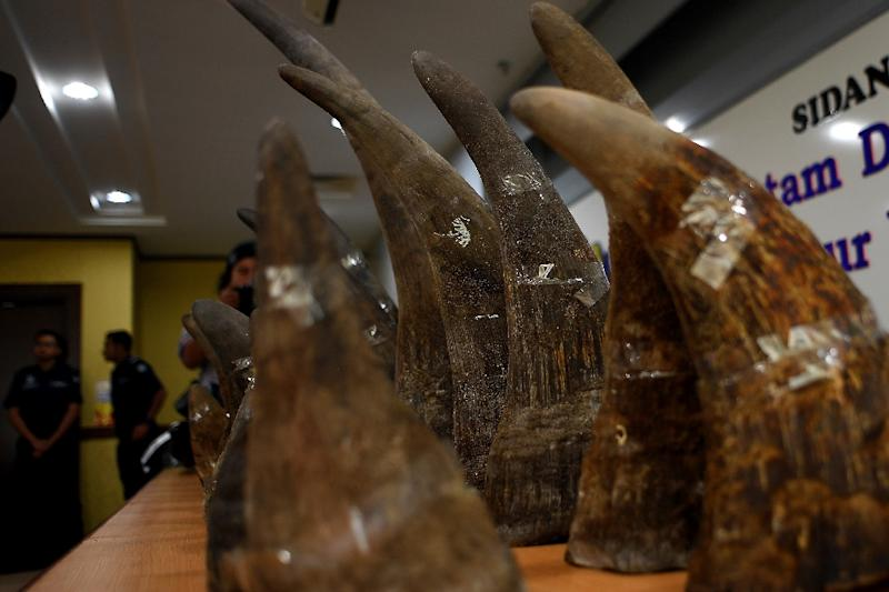 Seized rhino horns displayed at a press conference in Malaysia last year. (AFP Photo/MANAN VATSYAYANA)