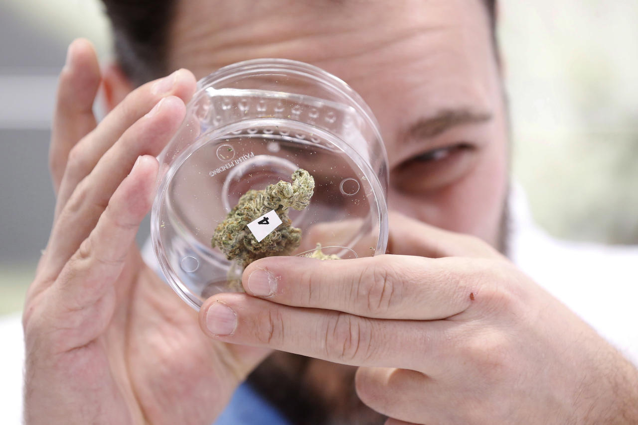 <p> Jean Marc looks at a sample at a cannabis store in Winnipeg, Manitoba, Wednesday, Oct. 17, 2018. Canada became the largest country with a legal national marijuana marketplace as sales began early Wednesday. (John Woods/The Canadian Press via AP) </p>