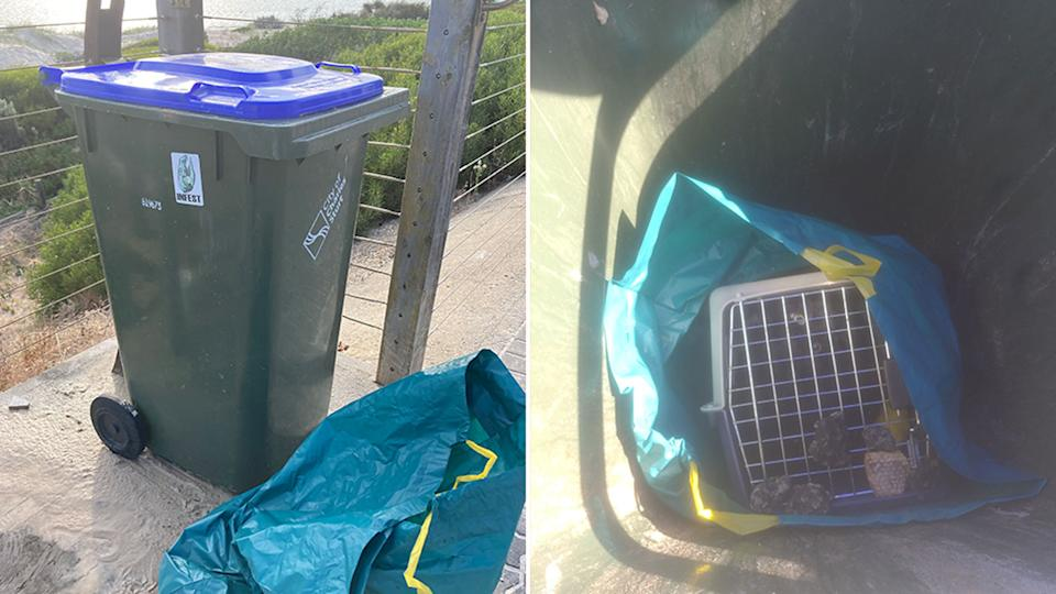 On the right is the bin the cat was found in and pictured on the left is the inside of the bin, where the cat's carrier is visible.