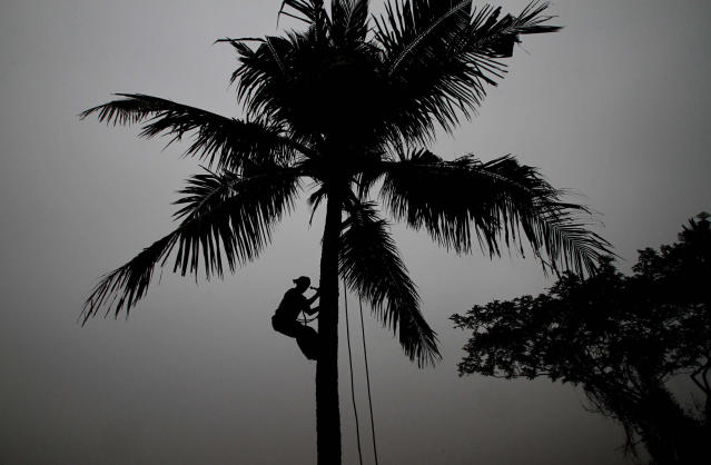 """After a Harvard professor deemed coconut oil """"pure poison,"""" India's horticulture commissioner wrote to the university requesting """"corrective measures"""" and a retraction. (Photo: Associated Press)"""