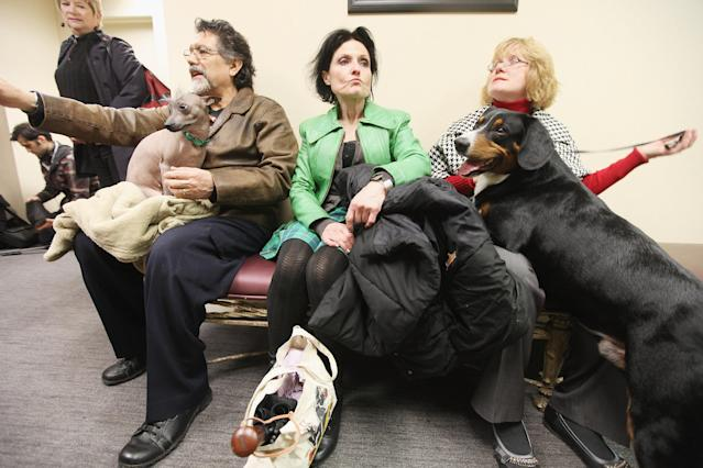 NEW YORK, NY - JANUARY 26: Alma (L), a Xoloitzcuintili breed, and Hoss (R), an Entlebucher Mountain Dog, wait for a press conference to start at the Westminster Kennel Club's 136th Annual Dog Show preview on January 26, 2012 in New York City. The show previewed six dog breeds who will participate in the competition for the first time this year which occurs February 13-14. (Photo by Mario Tama/Getty Images)