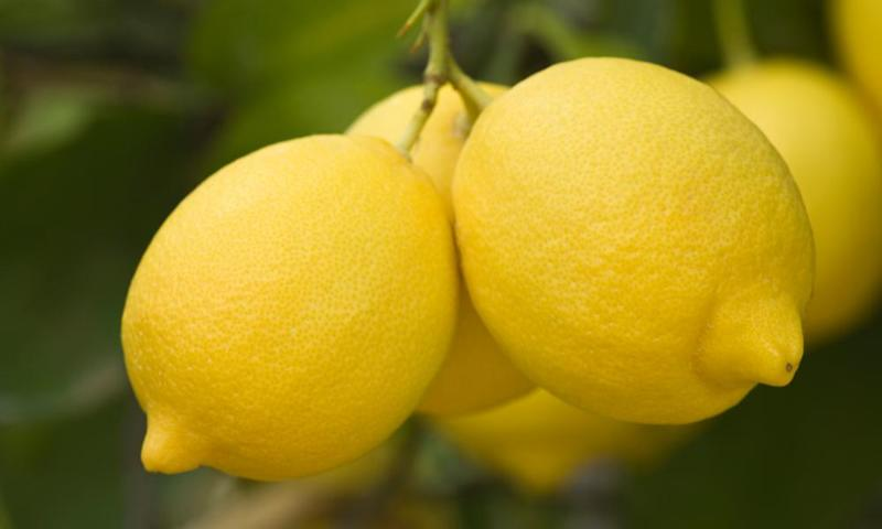 The pesticide chlorpyrifos is widely used in US agriculture, including citrus growing.