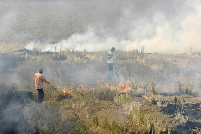 Farmers burn straw stubble after harvesting paddy crops in a field near Sultanpur Lodhi in Punjab