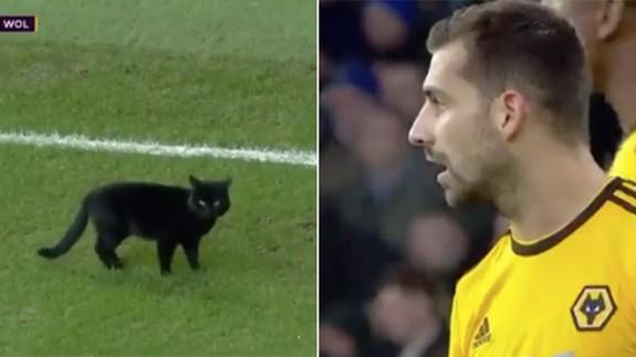 Cat Stops Soccer Game