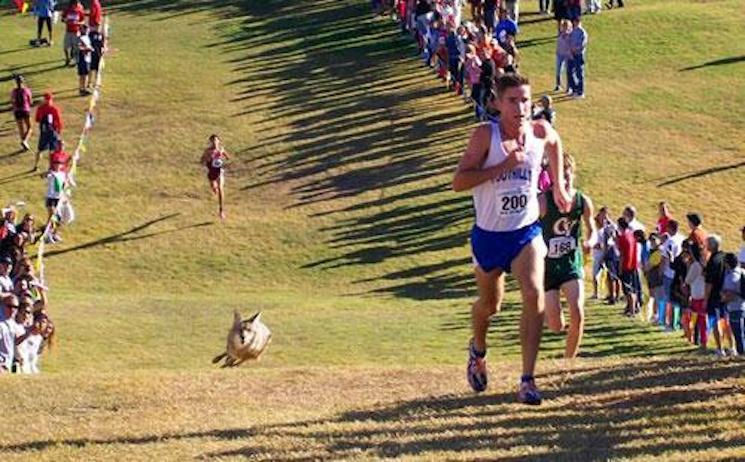 The Arizona state championship cross country race, complete with an unwanted intruder — Twitter