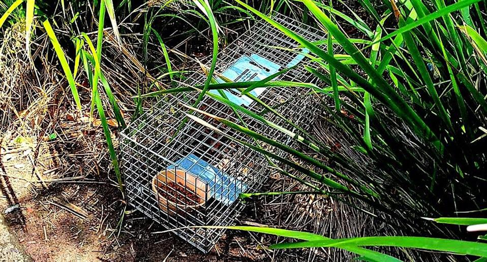 Trap with cat food inside at Sydney Park.