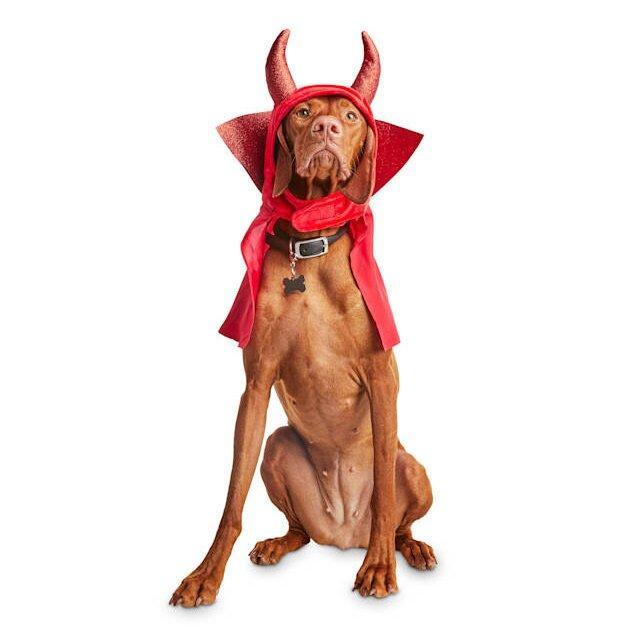 Dog wearing a Bootique Rebel Devil Pet Headpiece on a white background
