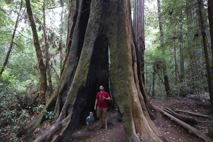 Brian van der BrugLos Angeles Times Andrew Walsh of Ben Lomond explores a hollow tree with son Philip, 2, in Big Basin Redwoods State Park.