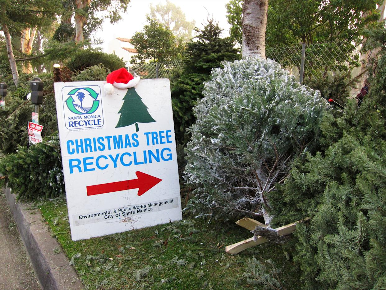 "Don't just chuck your used Christmas tree in the trash after the holidays. Repurpose or <a href=""http://www.realchristmastrees.org/dnn/All-About-Trees/How-to-Recycle"" rel=""nofollow noopener"" target=""_blank"" data-ylk=""slk:recycle it"" class=""link rapid-noclick-resp"">recycle it</a>!&nbsp; <br><br> Many towns and cities have curbside pick-up options for recycling Christmas trees, or recycling drop-off centers. Some also offer tree <a href=""http://gizmodo.com/how-to-recycle-your-christmas-tree-1674169369"" rel=""nofollow noopener"" target=""_blank"" data-ylk=""slk:mulching and chipping"" class=""link rapid-noclick-resp"">mulching and chipping</a> programs, allowing residents to recycle their trees and take home a free bag of mulch for their garden. <br><br> Feeling handy? You can also turn your tree into a DIY project. Create coasters and decorations with the branches and trunk of your tree. Or make some Christmas-scented <a href=""http://www.telegraph.co.uk/gardening/problem-solving/what-to-do-with-your-christmas-tree-in-january/"" rel=""nofollow noopener"" target=""_blank"" data-ylk=""slk:potpourri"" class=""link rapid-noclick-resp"">potpourri</a>."
