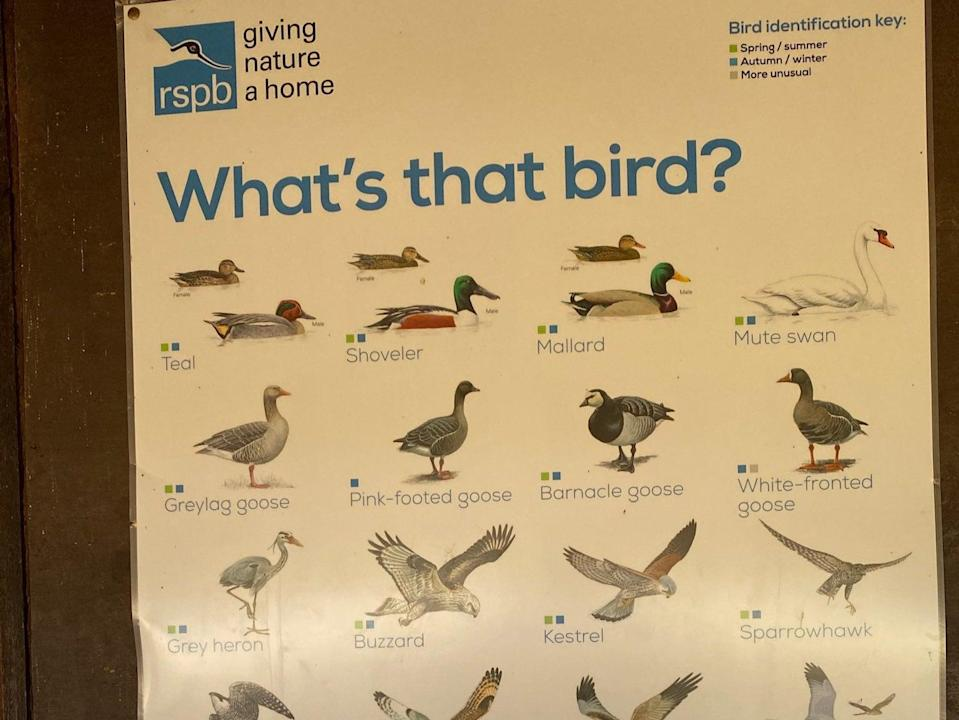 A photo of an RSPB bird-identifier poster that shows small inset photos of female birds alongside larger photos of their male counterparts (Mya-Rose Craig)