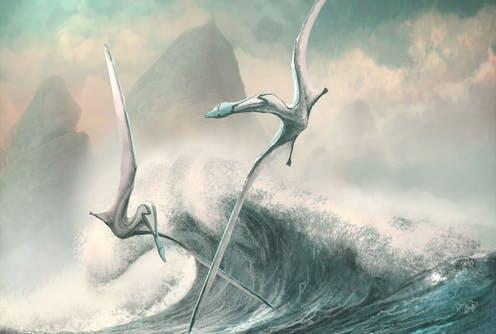 "<span class=""caption"">Two _Cimoliopterus_ pterosaurs, with 5m wing spans.</span> <span class=""attribution""><span class=""source"">Mark Witton/University of Reading</span>, <span class=""license"">Author provided</span></span>"