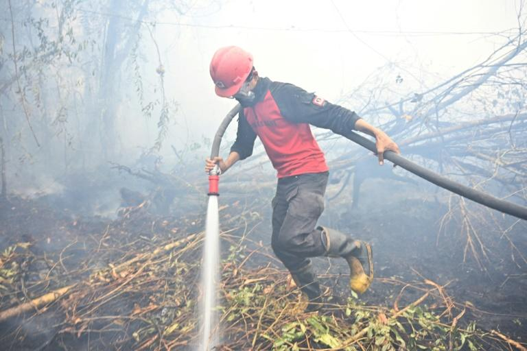 Vast blazes are ripping across the Indonesia's rainforests (AFP Photo/ADEK BERRY)