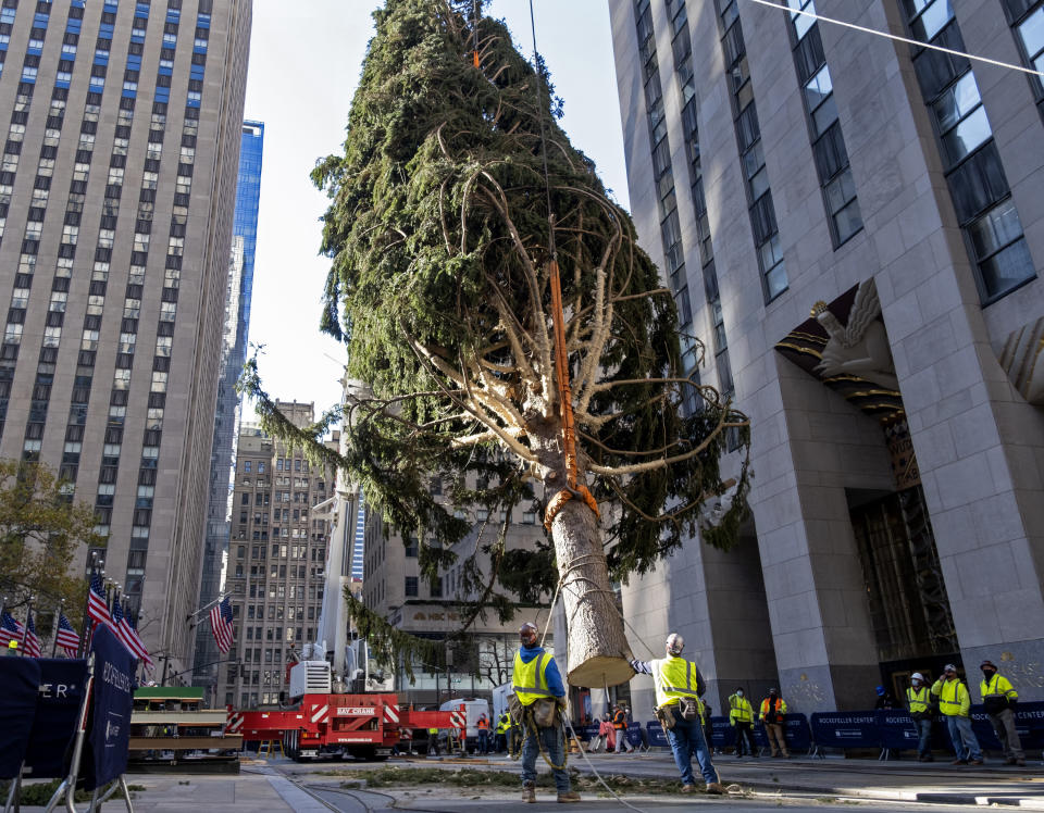 FILE - In this Saturday, Nov. 14, 2020, file photo, the 2020 Rockefeller Center Christmas tree, a 75-foot tall Norway Spruce that was acquired in Oneonta, N.Y., is suspended by a crane as it's prepared for setting on a platform at Rockefeller Center in New York. The tree lighting ceremony, scheduled for Wednesday, Dec. 2, be a mask-mandated, time-limited, socially distanced locale due to the coronavirus pandemic. (AP Photo/Craig Ruttle, File)