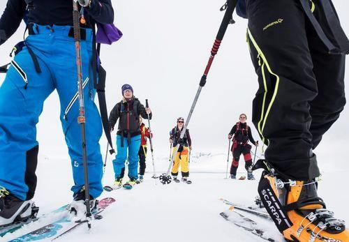 low shot of cross-country skiers