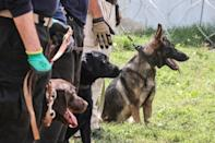 The dogs will be put to work again at the airport as it gradually reopens (AFP/Karim SAHIB)