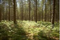 <p>Located in Hampshire, the Forest is one of the largest remaining tracts of unenclosed pasture land in the south of England and was once a royal hunting ground for William the Conqueror.</p><p>Covering an area of approximately 566 square kilometres, it's the best place to spot deer, ponies and cattle in the woodland while on a walk, cycle or horse ride. </p><p>There are also several tea rooms and traditional pubs, as well as restaurants in the coastal town of Lymington (we suggest booking a table at the Lanes of Lymington). </p><p><strong>Distance from London</strong>: 69 miles</p><p><strong>How to get there</strong>: London to The New Forest via M3 in the car (1hr 41mins).</p>