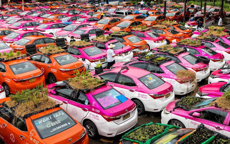In Bangkok, Thailand, vegetable gardens are seen on the roofs of vehicles of a taxi rental garage firm, whose cars are currently out of service due to the downturn in business as a result of the Covid-19 pandemic - JACK TAYLOR/AFP via Getty Images