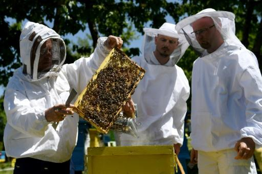 The bucolic bee farm is one of the biggest in Albania and the only operation in the Balkan state to export its honey abroad