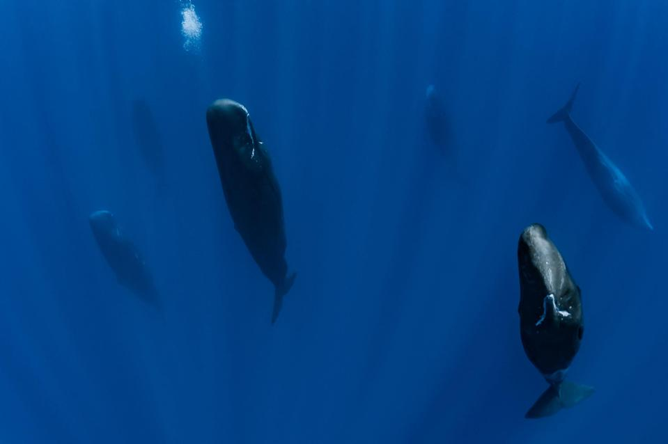 A group of whales sleeping
